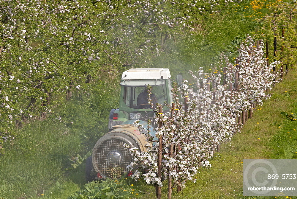apple tree fruit trees apple trees with blossoms on field agriculture tractor spraying insecticide Lower Saxony Germany (Malus)