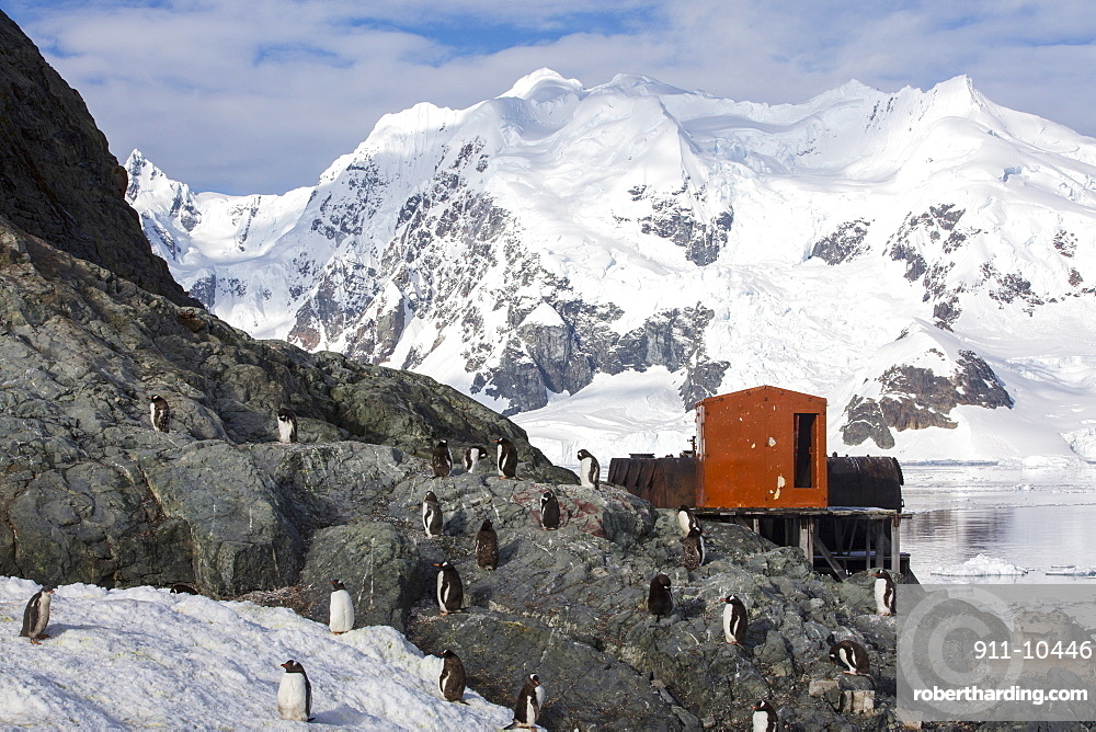 Gentoo Penguins at the Argentine antarctic research station in stunning coastal scenery beneath Mount Walker in Paradise Bay off Graham Land on the Antarctic Peninsular. the Peninsular is one of the most rapidly warming places on the planet.
