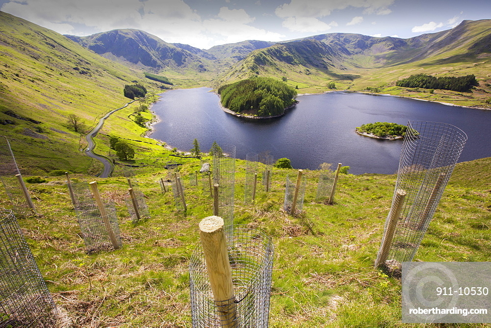 Tree planting at Haweswater, Lake District, UK.