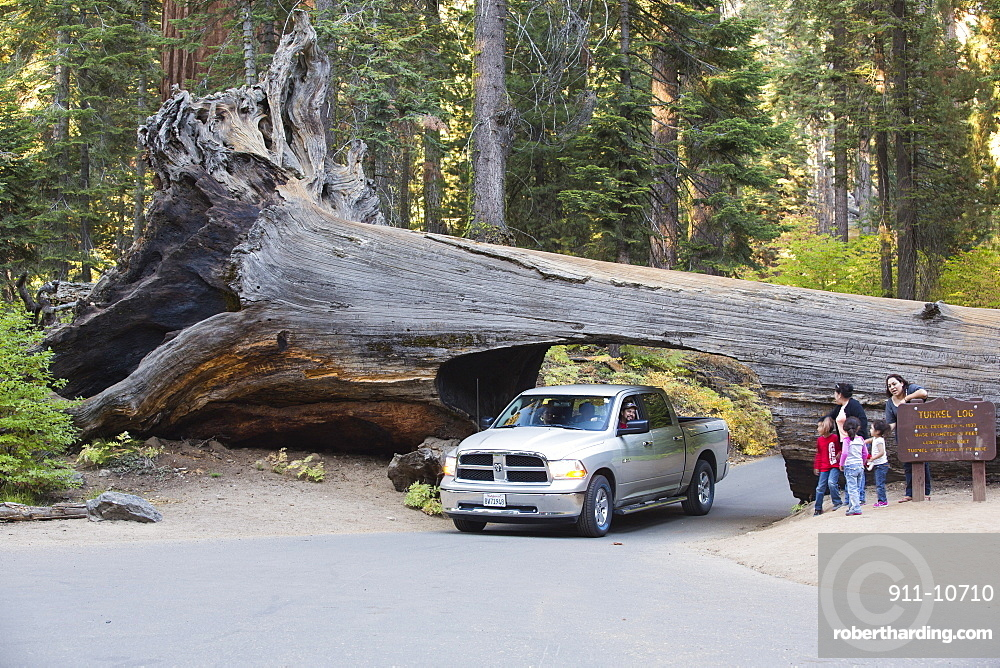 The Tunnel Log a fallen Giant Redwood, or Sequoia, Sequoiadendron giganteum, in Sequoia National Park, California, USA.