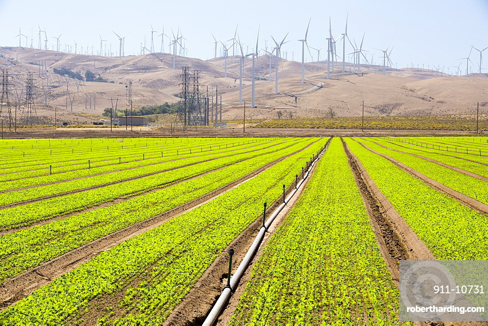 Crops being irrigated below the Tehachapi Pass wind farm, the first large scale wind farm area developed in the US, California, USA.