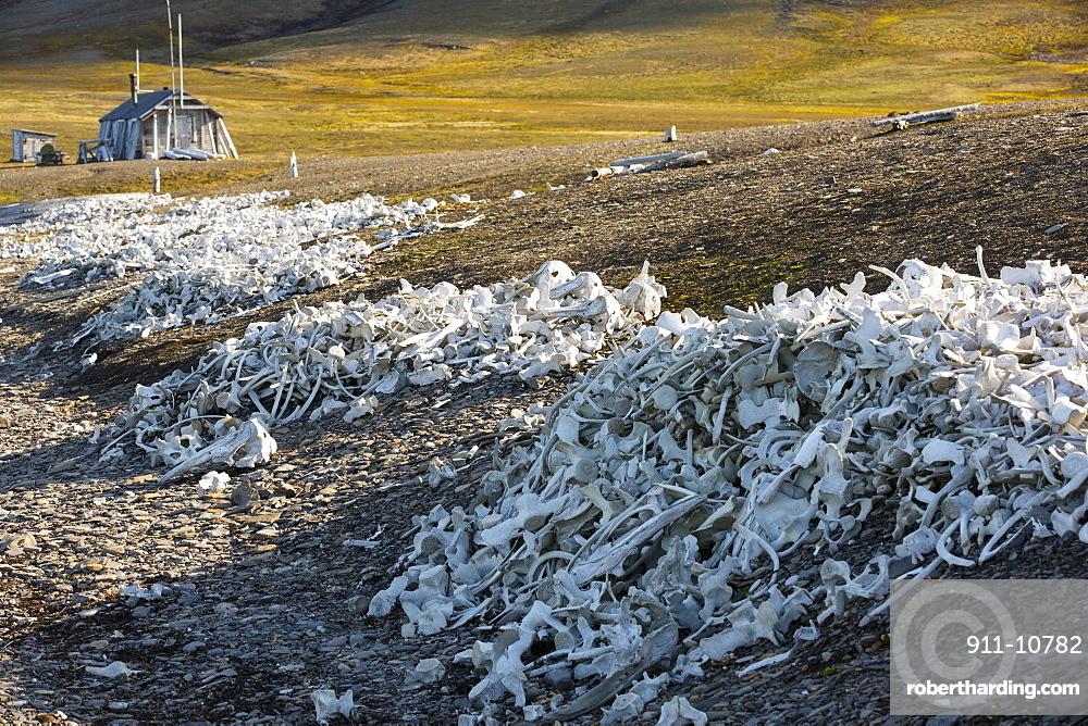 Remains of Beluga Whales (Delphinapterus leucas) at Bourbonhamna (77¬8 33'Äôn 15¬8 00'Äôe) in Van Mijenfjorden, Spitzebergen; Svalbard. This stark reminder of humanity hunted whales to near extinction contains the raimains of over 100 Beluga's
