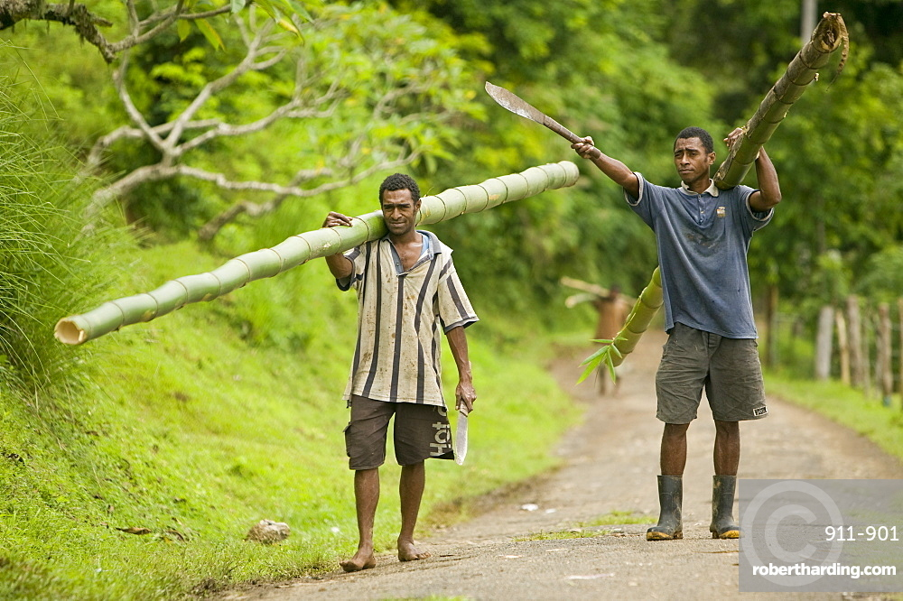 Fijian Men Carrying Bamboo Poles Stock Photo