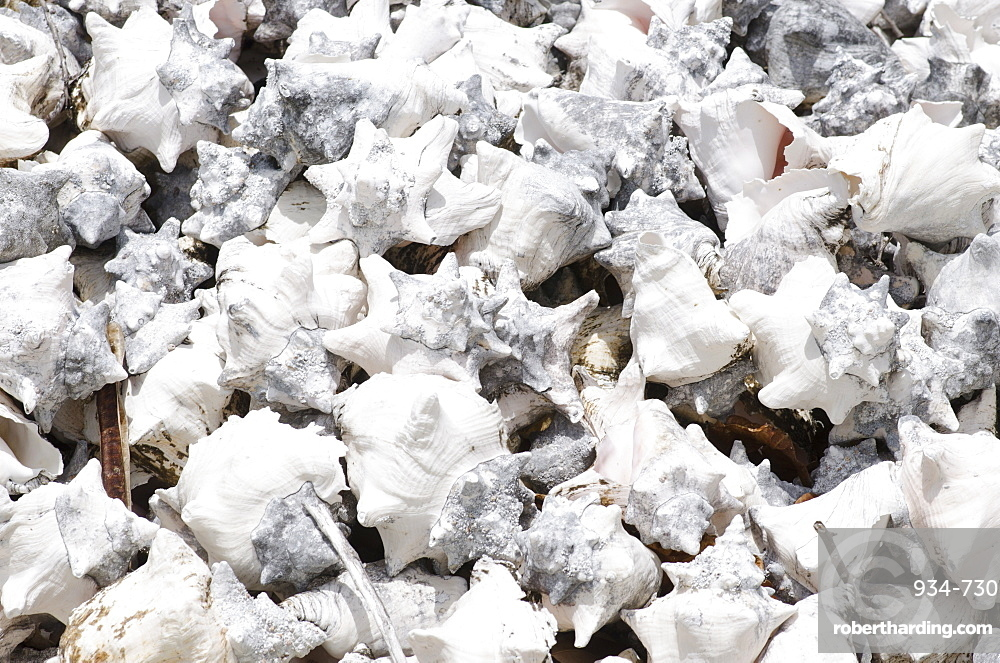 Pile of conch shells, Turks and Caicos, West Indies, Central America