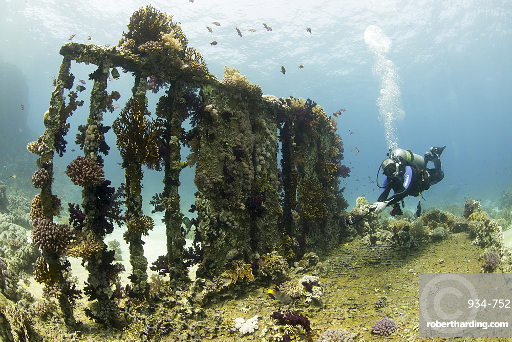 Camera being used by diver underwater on the Yolanda wreck in the Red Sea,. Egypt, North Africa, Africa