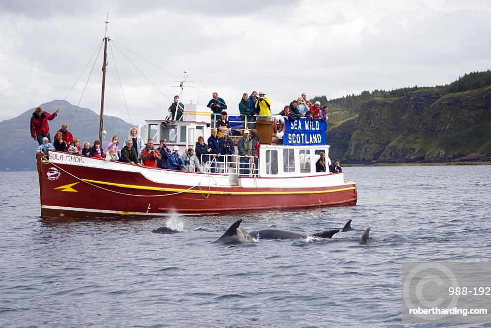 Marine wildlife-watching boat.  Encounter with bottlenose dolphins (Tursiops truncatus).  Hebrides, Scotland