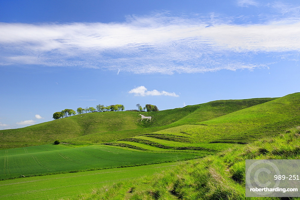 Cherhill white horse, first cut into chalk downland in 1780, Wiltshire, England, United Kingdom, Europe