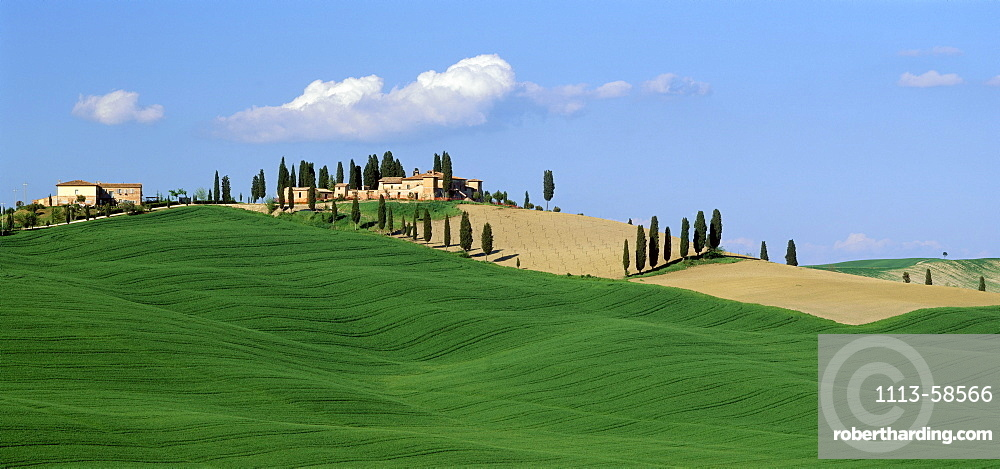 Landscape with cypresses and farmhouse, Crete, south of Siena, Tuskany, Italy