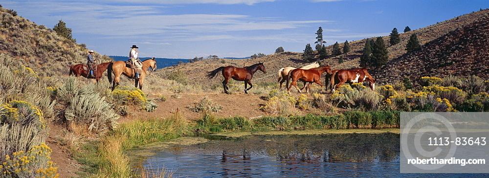 Cowboys on horseback in the Wild West, Oregon, USA