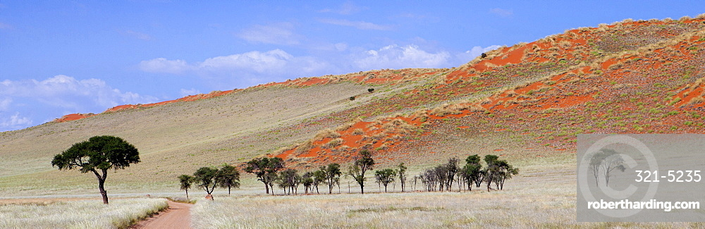 Panoramic view showing trees and grass-covered orange sand dunes, Namib Rand game reserve, Namib Naukluft Park, Namibia, Africa