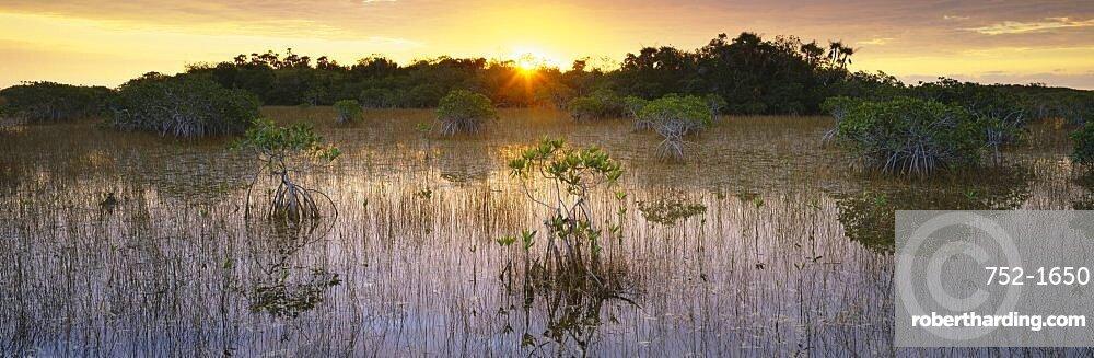 Sunrise over a pond, Everglades National Park, Florida, USA