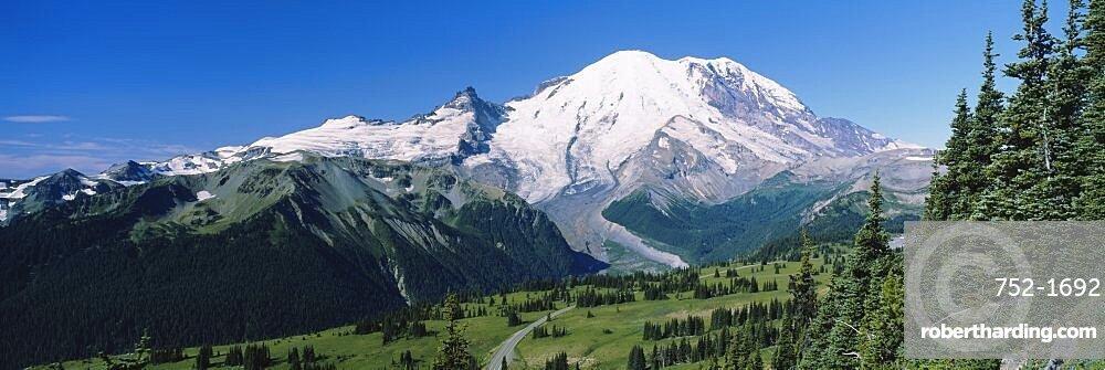 Forest On A Mountainside, Mt Rainier, Mt Rainier National Park, Washington State, USA
