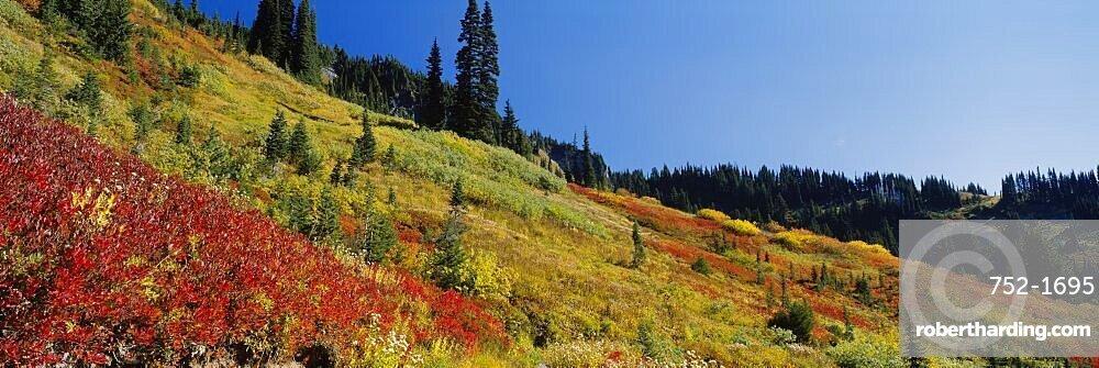 Bushes and trees on a mountainside, Mt Rainier National Park, Washington State, USA