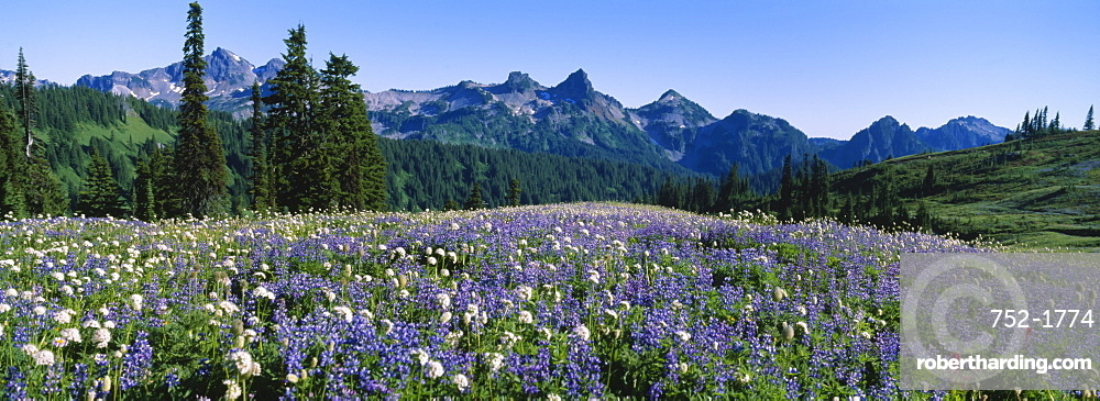 Wildflowers On A Landscape, Tatoosh Range, Mt Rainier National Park, Washington State, USA