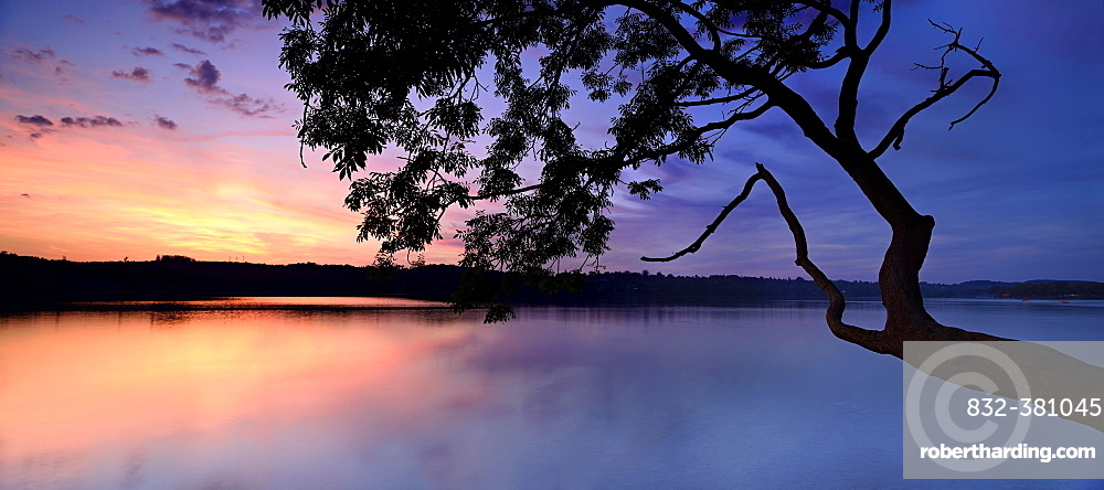 Sunset, tree on lake Pilsensee, Bavaria, Germany, Europe