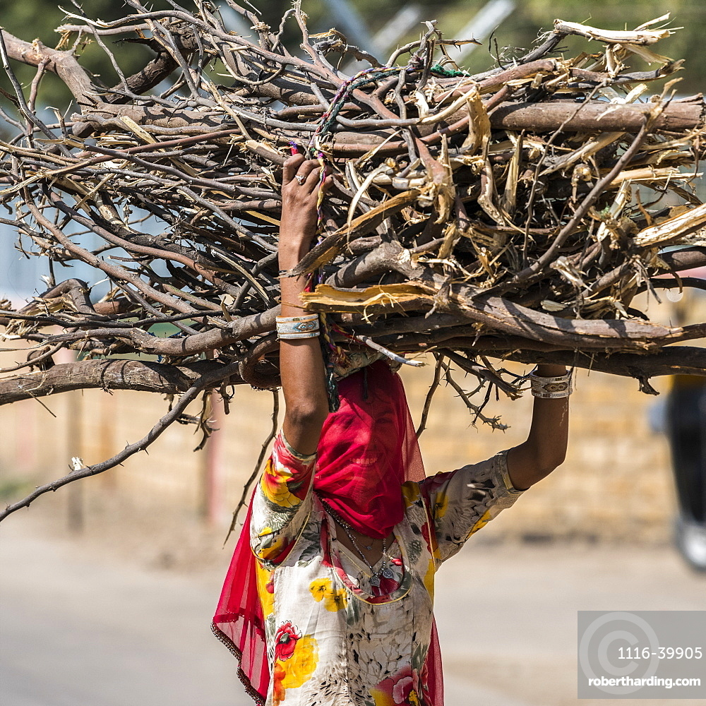 Indian woman with covered face carries a large bundle of branches on her head, Kishan Ghjat, Rajasthan, India