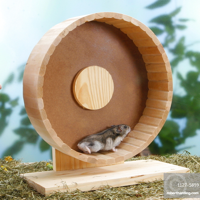 Russian Dwarf Hamster in hamster wheel / (Phodopus sungorus)