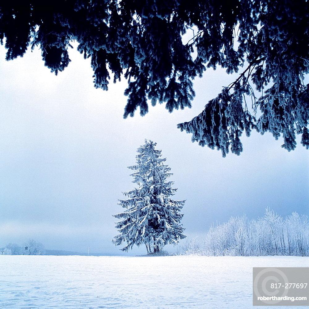 Germany, Schoenwald im Schwarzwald, Gutach, Gutach valley, Schwarzwald-Baar-Kreis, Black Forest, Baden-Wuerttemberg, winter landscape, misty, snow-covered fir-tree, deciduous trees covered with hoar-frost. Germany, Schoenwald im Schwarzwald, Gutach, Gutach valley, Schwarzwald-Baar-Kreis, Black Forest, Baden-Wuerttemberg, winter landscape, misty, snow-covered fir-tree, deciduous trees covered with hoar-frost