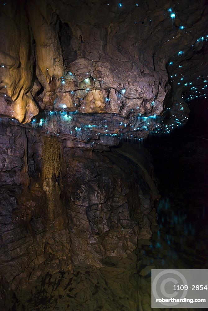 Glow worms in Waitomo Caves, Waikato Region, North Island, New Zealand, Pacific