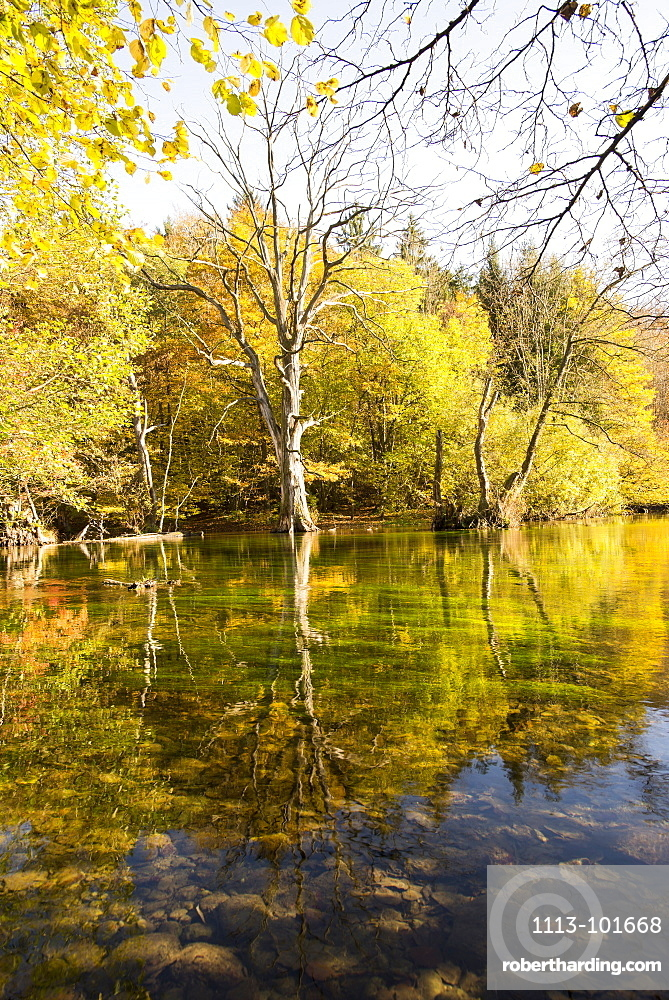 Autumnal forest and the Meander of the river Wuerm, Gauting, Bavaria, Germany