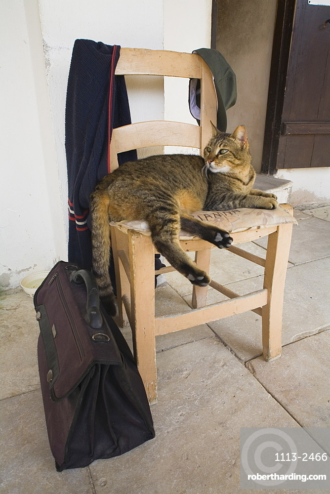 Cat lying on a chair in Neofytos monastary, near Paphos, South Cyprus, Cyprus