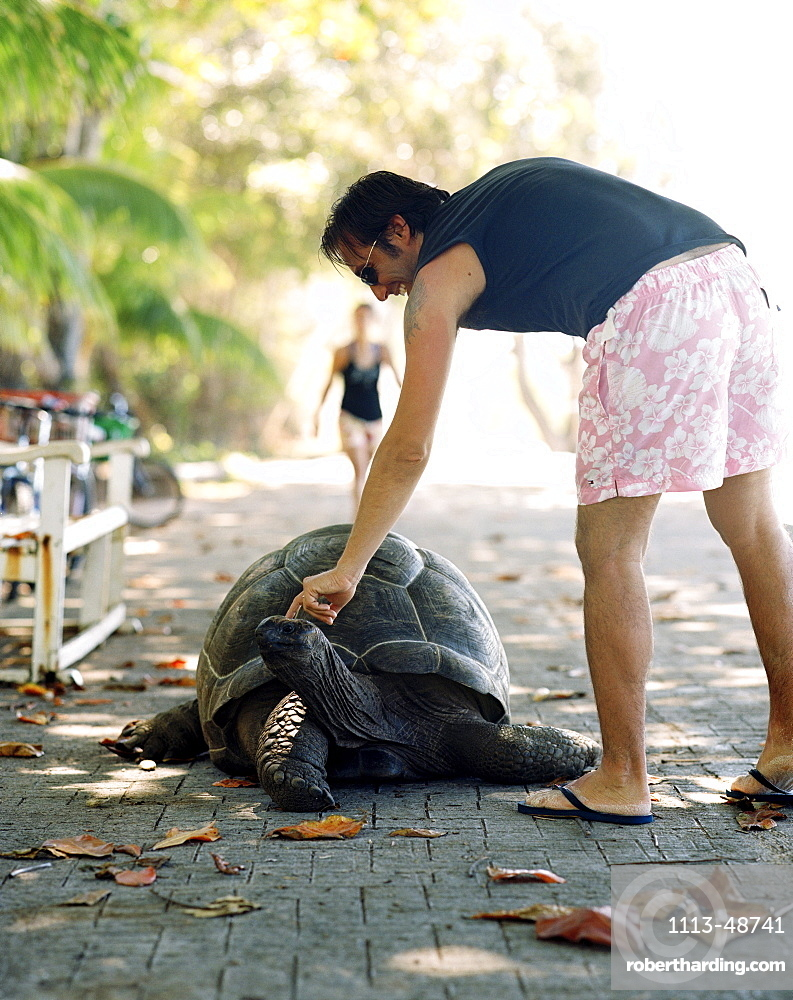 Tourist petting 28 year old turtle on the promenade at Anse Banane, eastern La Digue, La Digue and Inner Islands, Republic of Seychelles, Indian Ocean