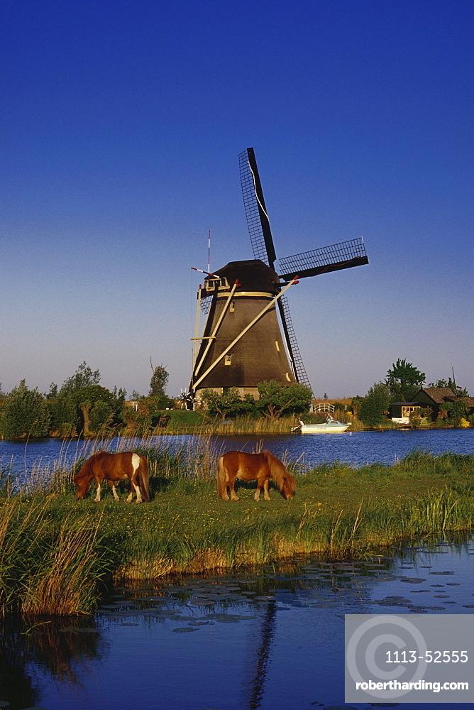 Windmill and horses, Kinderdijk, Netherlands