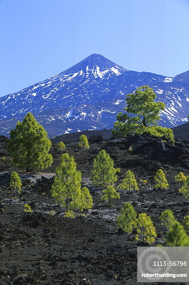 Mountain top of Teide, Pico del Teide, 3718m from Pinar de Chio, Tenerife, Canary Islands, Spain