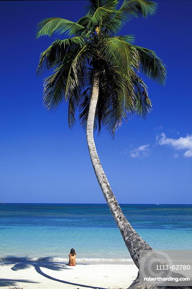 Palm beach, coconut palm, Dominican Republic, Caribbean