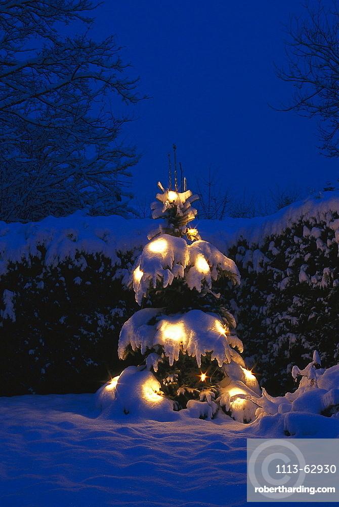 Fir tree with Christmas lighting, winter landscape