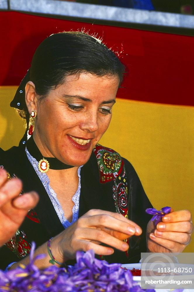 Picking safran, safranrose festival, Consuegra, Province Toledo, Castilla La Mancha, Spain97