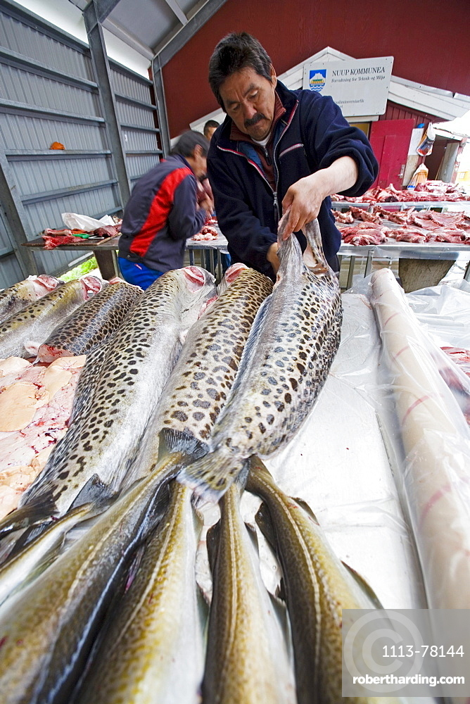 A Inuit, Eskimo prepares Catfish at the fish- and meatmarket of Nuuk, capital of Greenland