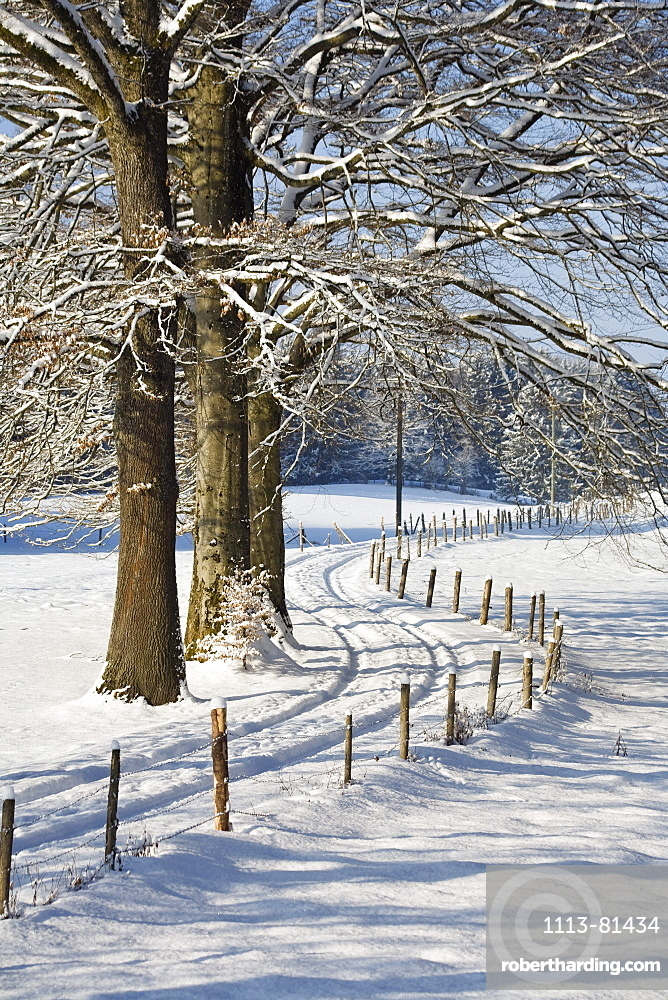 winter scenery with road, Upper Bavaria, Germany