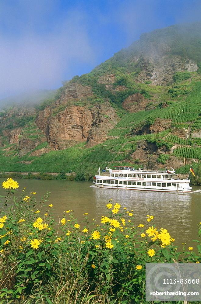 Excursion boat near vineyard, Erden, Mosel-Saar-Ruwer, Rhineland-Palatinate, Germany
