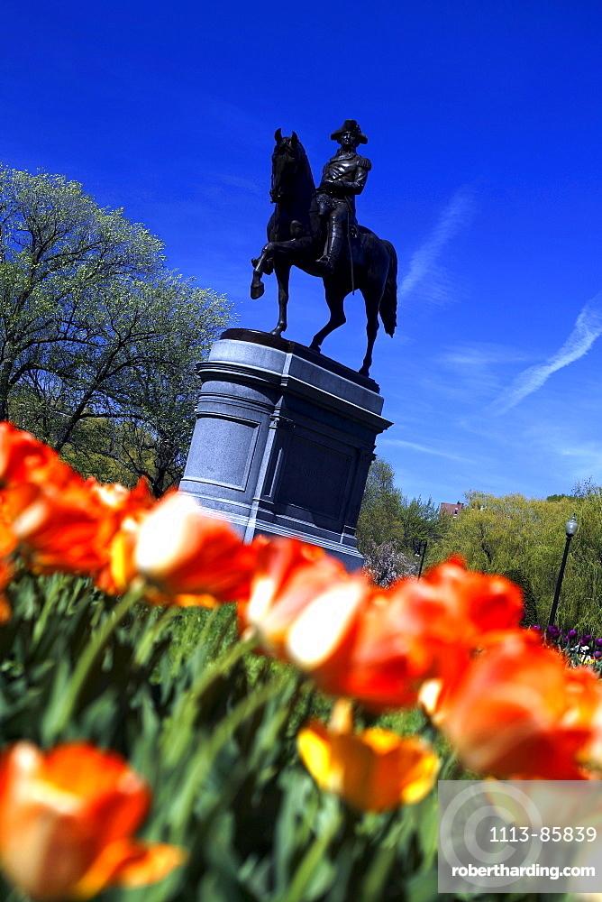 View of flowers, The Public Gardens, Boston, Massachusetts, USA