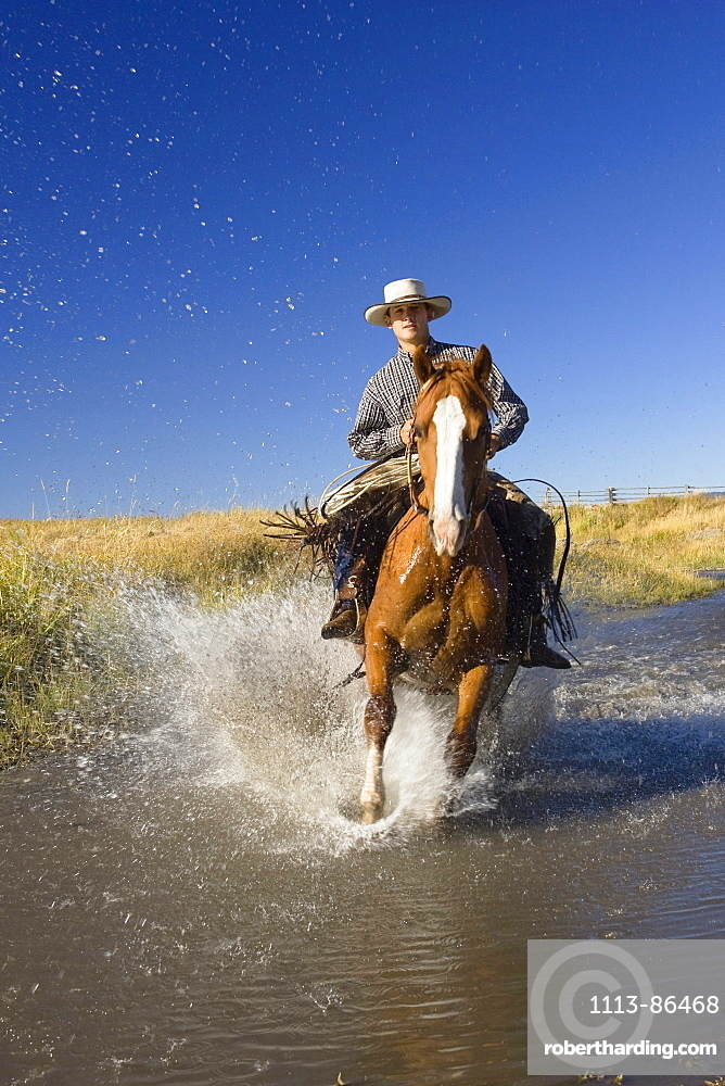 Cowboy riding in water, wildwest, Oregon, USA