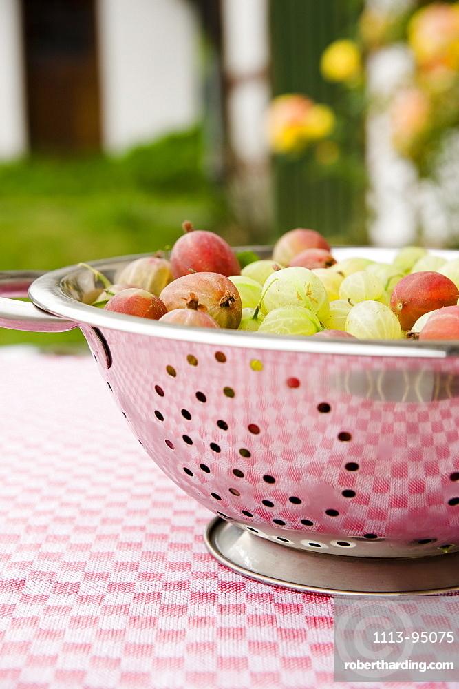 Freshly picked gooseberries, harvest, Fruit