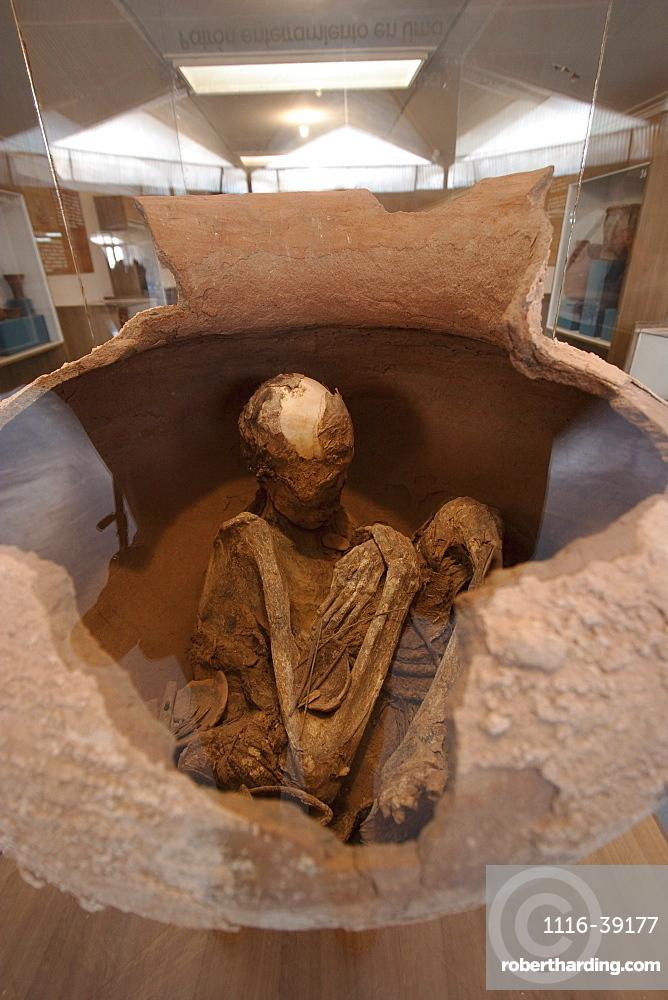 Skeleton In A Pot On Display At The Archaeological Museum R. P. Gustavo Le Paige, San Pedro De Atacama, Antofagasta Region, Chile