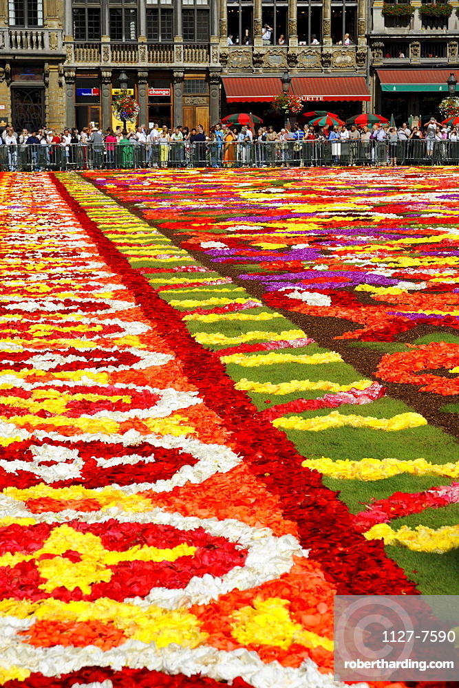 Carpet of flowers on city hall square, Grote Markt, Brussels, Belgium / Grand-Place