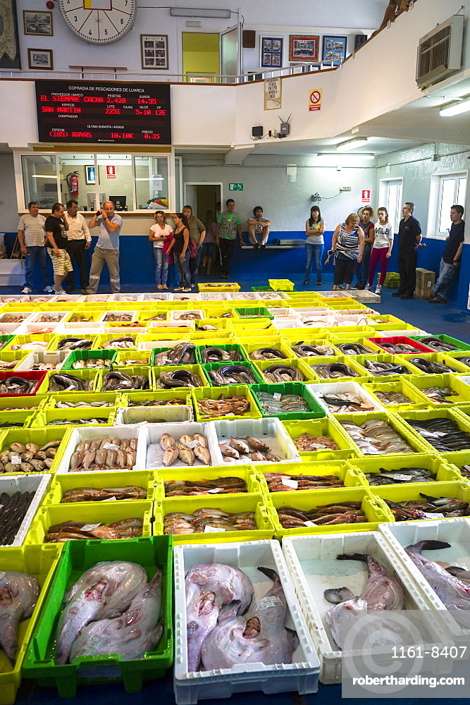 Auction of freshly-caught fish at Confradia de Pescadores de Luarca, Confederation of Luarca Fishermen, Puerto Luarca, Asturias, Spain, Europe