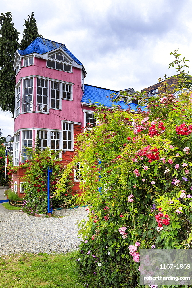 Brightly coloured pink building and pink roses, Chiloe, capital of Castro, Isla Grande de Chiloe, Chile, South America