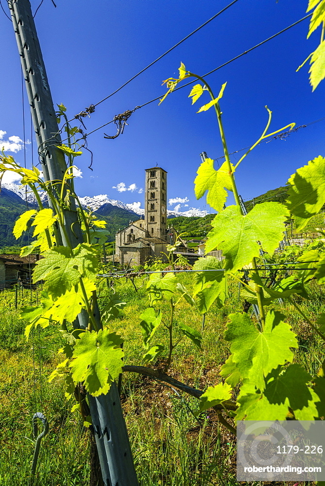 The Church of Villa di Tirano, hidden among the vineyards of Valtellina during the vibrant summer season. Lombardy, Italy, Europe