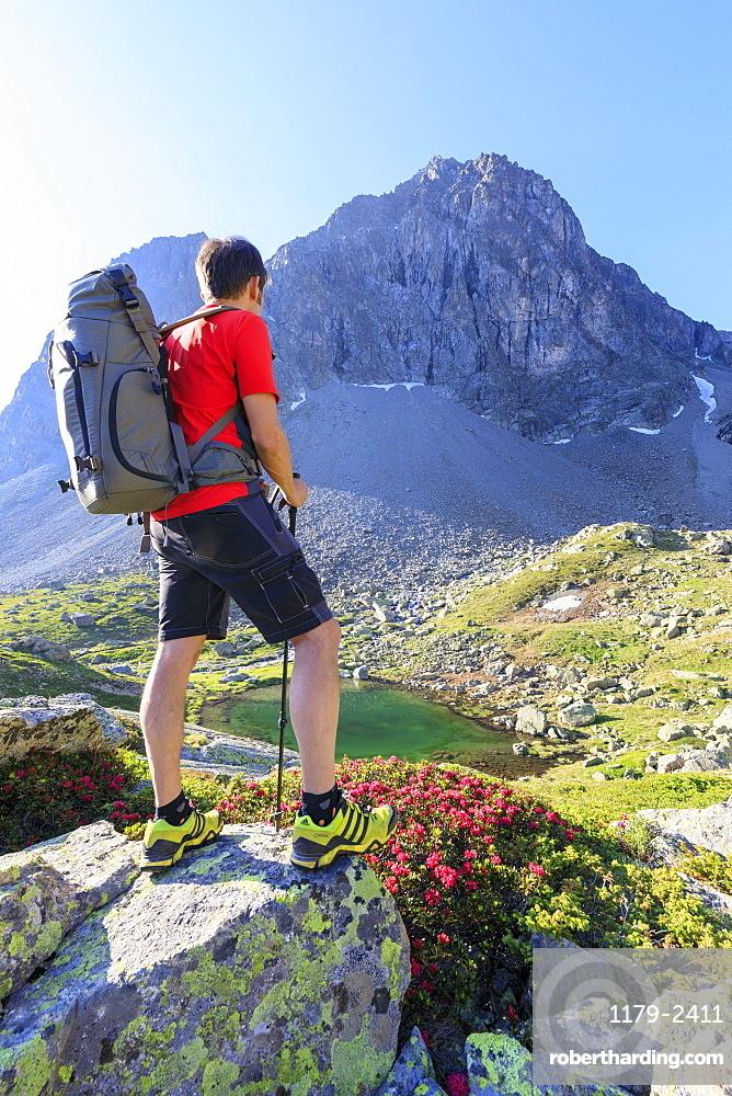 Hiker at Julier Pass with Piz Polatschin in the background, St. Moritz, Engadine, Canton of Graubunden, Switzerland, Europe