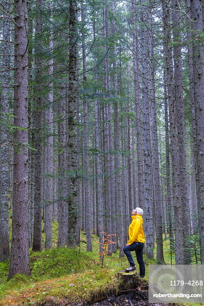 Woman standing in the forest looking up at tall trees, Somadida Nature Reserve, Dolomites, Auronzo di Cadore, Veneto, Italy