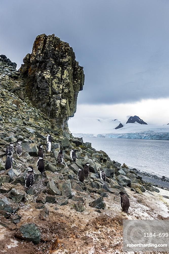Penguins below dramatic rock formations, Half Moon Bay, South Sheltand islands, Antarctica