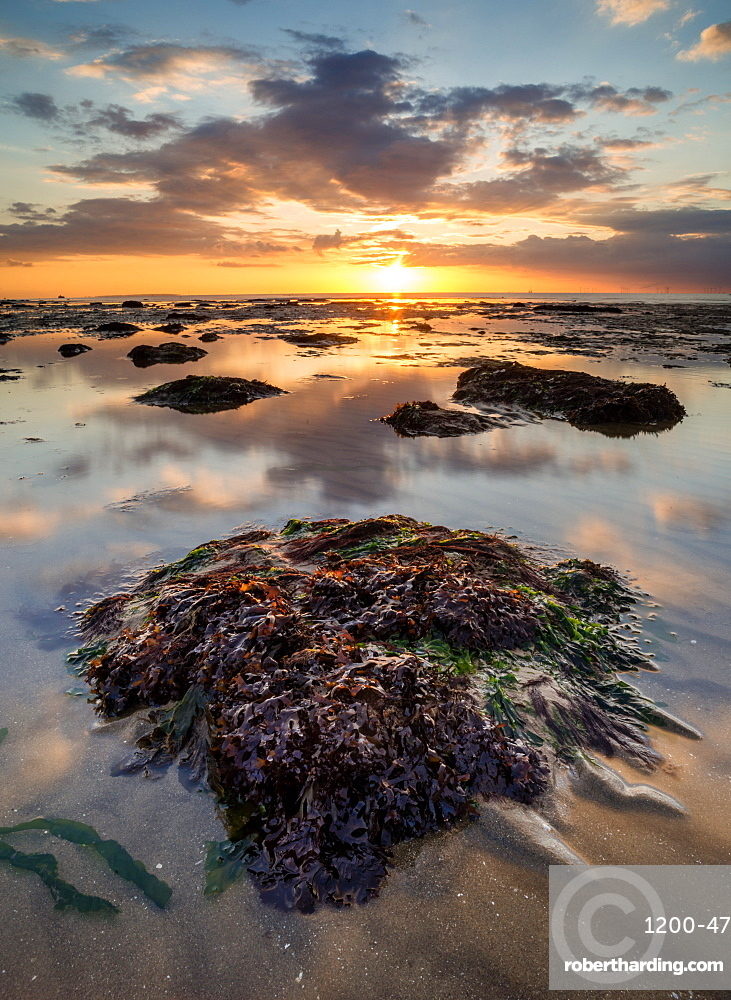 View of sandy beach and seaweed covered rock at sunset, Reculver, Kent, England, United Kingdom, Europe