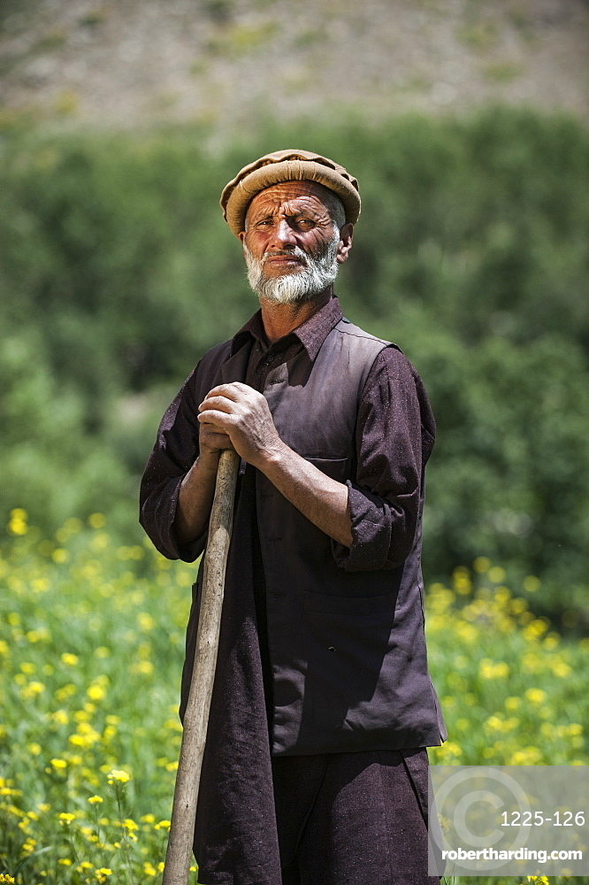 A farmer standing in a wheat field mixed with rapeseed oil in the Panjshir Valley, Afghanistan, Asia