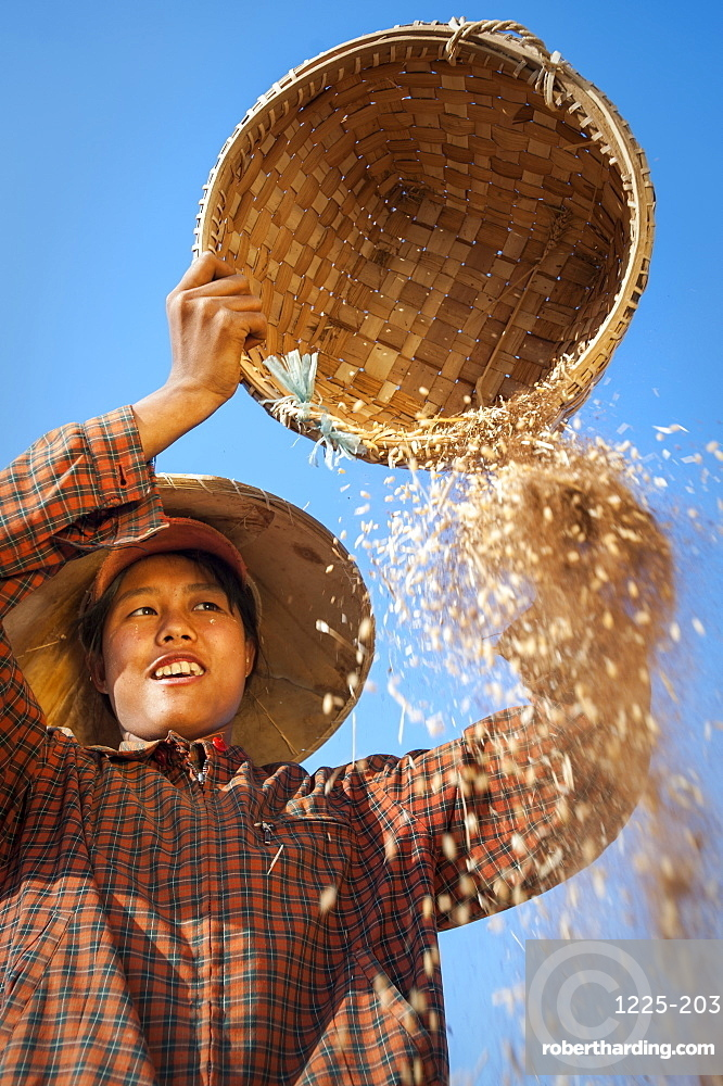 A girl winnows wheat, sorting away the husks, by pouring it in the wind, Shan State, Myanmar (Burma), Asia