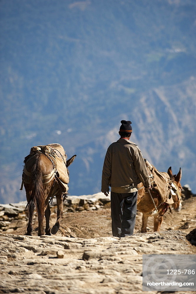A man walks down from his little village in the hills of Uttarakhand (Uttaranchal), India, Asia