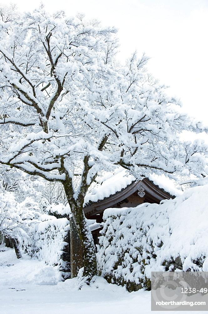 Fresh snow on Jikko-in Temple entrance, Ohara valley, Kyoto, Japan, Asia
